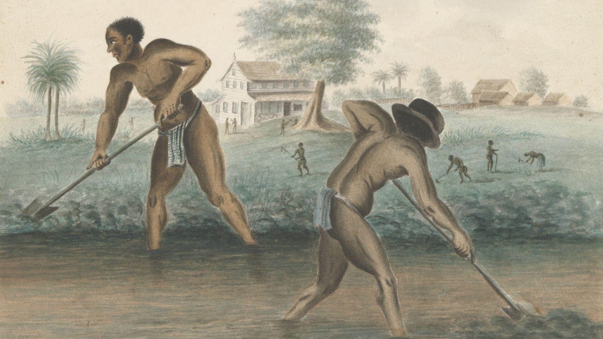 Tot slaaf gemaakte mannen werken op het land